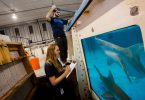 New College of Florida students do research on sharks at Mote Marine Laboratory in Sarasota