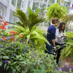 Hillsdale College students work among greenhouse plants
