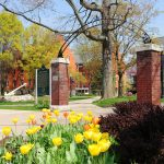 Tulips bloom on the Hope College campus
