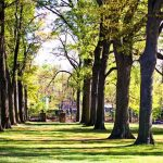 The Rhodes College campus is filled with centuries-old trees