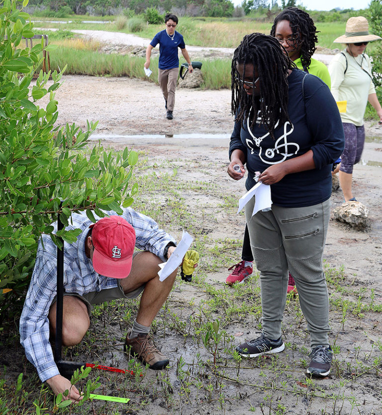 Biology professor Brad Oberle checks the placement of tea bags buried to measure the rate of decay in soil at Robinson Preserve in Manatee County.