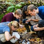 Three Guilford College students and their Biology professor do research at a creek in the campus woods.